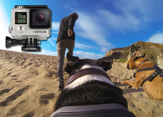 GoPro Go-Walkies Dog Walking Dog Boarding Chorley Lancashire